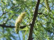 Evaluación de la vegetación del estrato herbáceo de un bosque del Espinal Santafesino (Argentina)