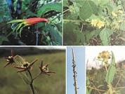 Biodiversidad de la flora vascular de la provincia de Misiones, Región Paranaense, Argentina